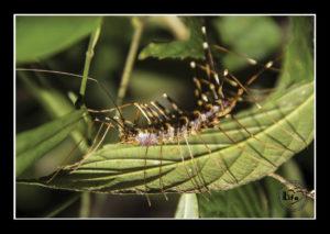 hmyz_a_ostatni