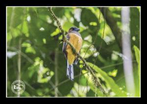 ptaci4
